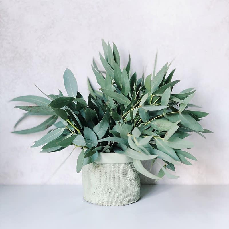 Eucalyptus - Parfum pour bougies Parfum volume 30 ml
