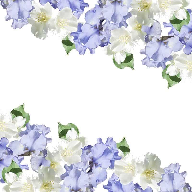 Iris jasmin - Parfum pour bougies Parfum volume 30 ml