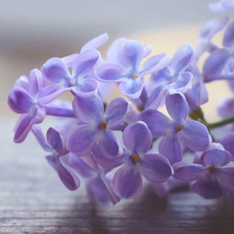 Lilas - Parfum pour bougies Parfum volume 30 ml
