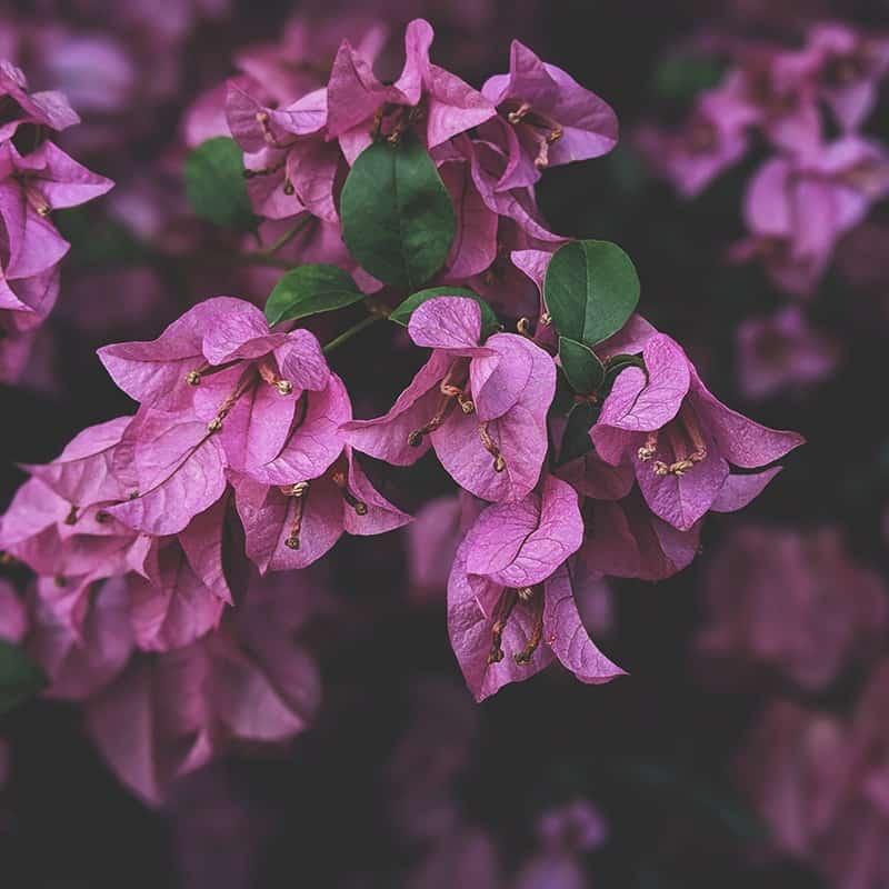 Violette - Parfum pour bougies Parfum volume 30 ml